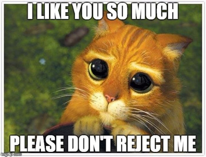 """""""I like you so much. Please don't reject me."""""""