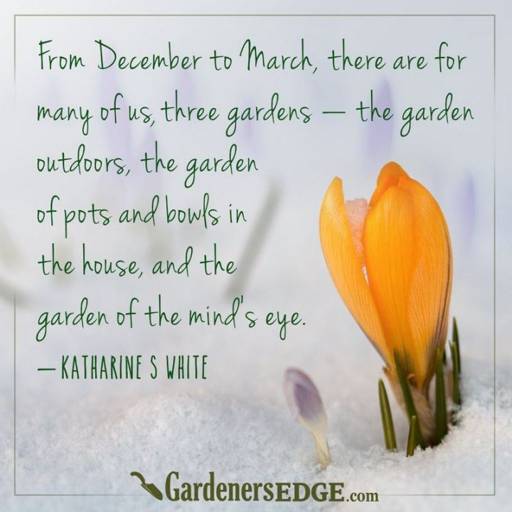 """""""From December to March, there are for many of us three gardens: the garden outdoors, the garden of pots and bowls in the house, and the garden of the mind's eye."""" - Katherine S. White"""