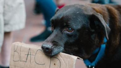 Photo of 15 Dogs With Signs Protesting for Black Lives Matter