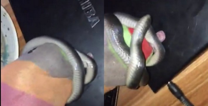 A Man captured a snake with his bare hands.  Snakes are the least favorite reptiles of many people especially in this part of the world.