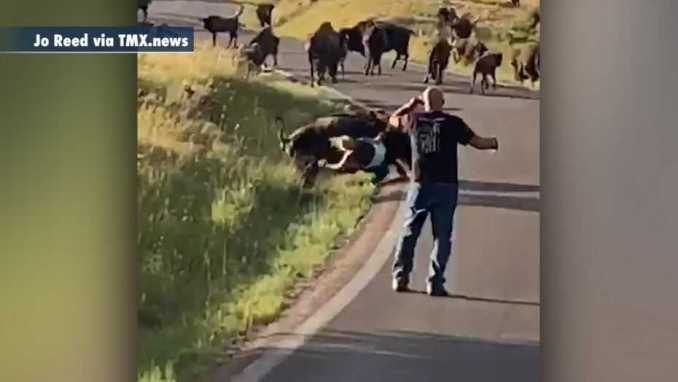 Woman attacked by bison in South Dakota for getting too close its calf