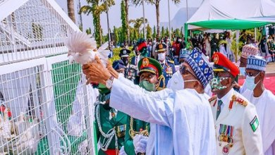 it's natural pigeons released by Buhari didn't fly