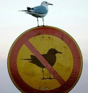 winn_collier_writer_bird_image