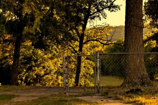 fence tree yard