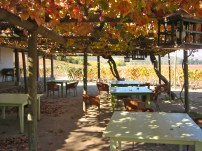 Casa Barrone with shade provided by 100 yr old grapevines
