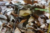 Mushroom in camo