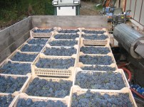 That's a whole lot of grapes!