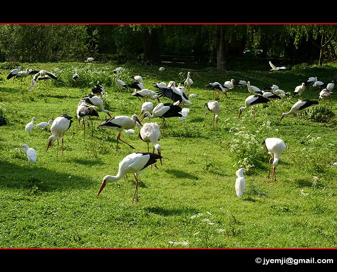 Hunawihr Parc des Cigognes