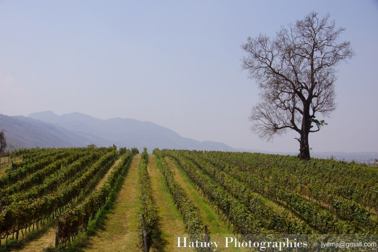 "Myanmar Birmanie, Photographies Myanmar Birmanie Travel in Birmania Myanmar, vignoble, vineyard blog by ""© Hatuey Photographies"""