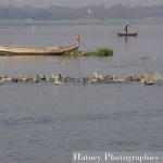 Asie, Myanmar,U BEIN Bridge,Amarapura, Taung Tha Man Lake, Mandalay, Photographies, by © Hatuey Photographies