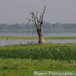 Asie, Hatuey Photographies, Myanmar,U BEIN - Ubein Bridge, Photographies, U BEIN - U bein Bridge by © Hatuey Photographies