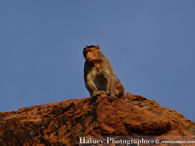 Singes de Badami Cave (India, Karnataka) , Tourism in South India. Photographs of South India, Photographies en Inde du Sud par © Hatuey Photographies
