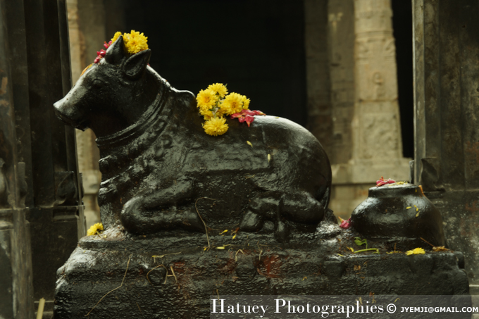 Kanchipuram, Ekambareswarar Temple (TN). Tourism in South India. Photographs of South India, Photographies en Inde du Sud par © Hatuey Photographies