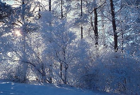 Winter Scenes Scenes Depicting The Winter Season