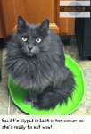 Discovering The #truenatureofcats At Mealtime: See How My Cats Behave