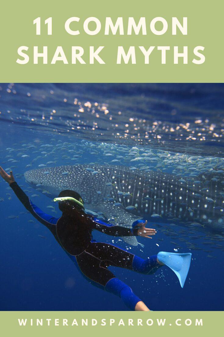 11 Common Shark Myths | winterandsparrow.com