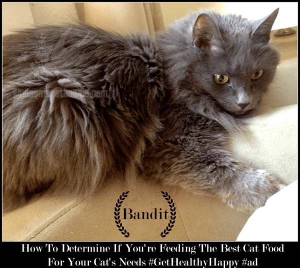 How To Determine If You're Feeding The Best Cat Food For Your Cat's Needs winterandsparrow.com #GetHealthyHappy #ad
