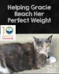 Helping Gracie Reach Her Perfect Weight