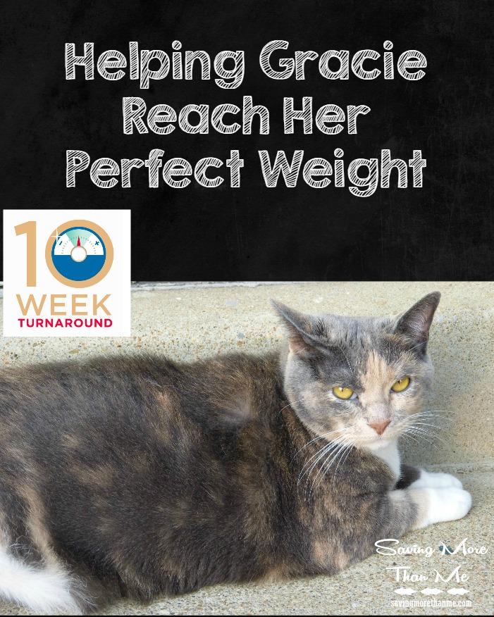 Helping Gracie Reach Her Perfect Weight @HillsPet #ad #PerfectWeight winterandsparrow.com
