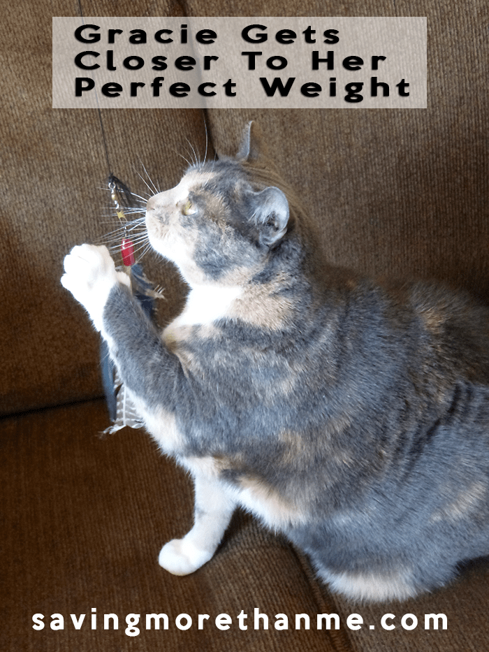 Gracie Gets Closer To Her Perfect Weight #Perfect Weight #ad winterandsparrow.com