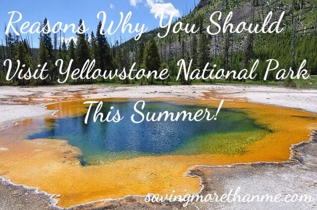 Reasons Why You Should Visit Yellowstone National Park This Summer!