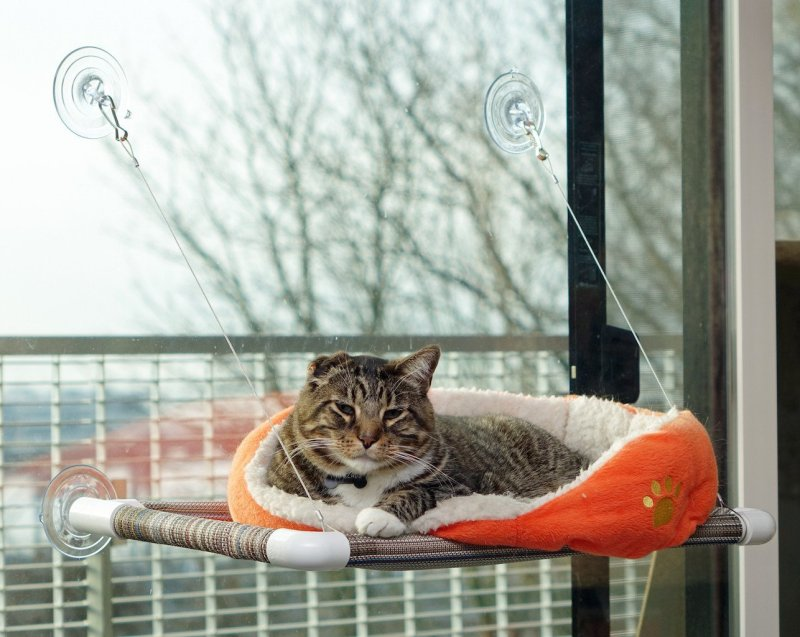 5 Gifts For Curious and Carnivorous Cats