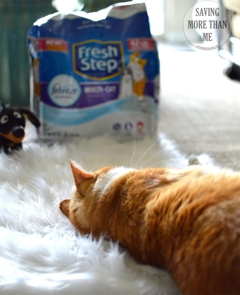 From Hard Knocks To Soft Spots (Garfield's Journey) #FreshStepFebreze Cat Litter @freshstep @petsmart AD