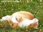 Cat Treats, Tennis Balls, and Happiness