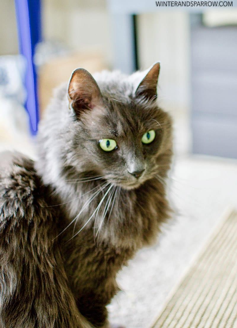 3 Ways You Can Help Senior Pets (Including Your Senior Feline Or Canine) #HillsTransformingLives @HillsPet #ad winterandsparrow.com