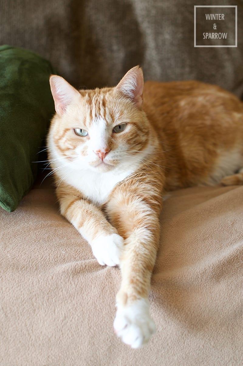 3 Key Organizational Tips For Multi-Pet Households #ad #TidyTreatment winterandsparrow.com
