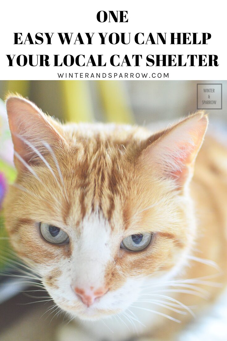 One Easy Way You Can Help Your Local Cat Shelter #LitterForGood @catspride #ad | winterandsparrow.com