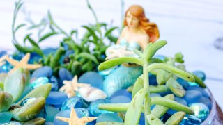 How to Make a Mermaid Garden with Succulents
