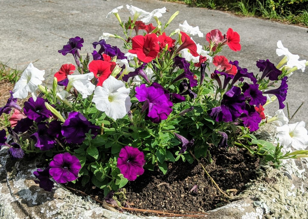 Image of red, white and purple flowers.