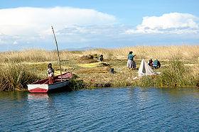 uros-harvesting-totora-o-lake-titicaca