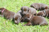 bowepuppies2