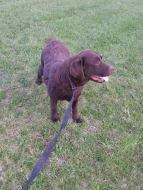 des-the-chocolate-lab-4