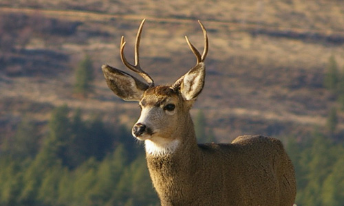 GO hunting in winthrop washington