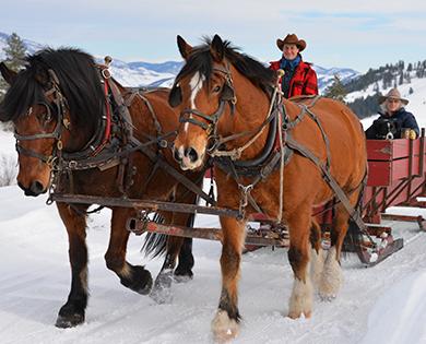 sleigh rides in winthrop washignton winter wonderland