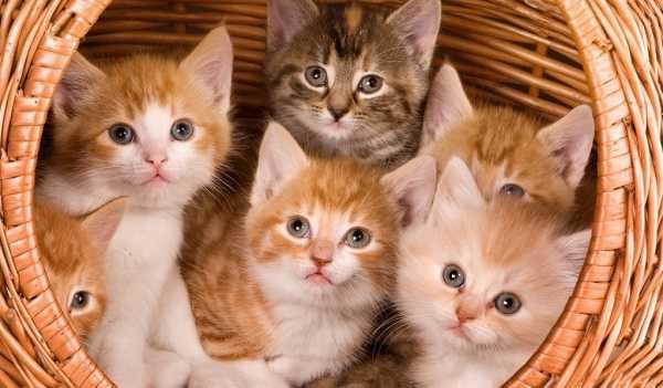Кошечка милая рисунок – Славные котята (100 фото ...