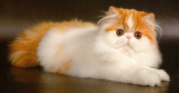 Котята и кошка рисунок – Картинки про кошек и котят ...