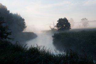 Drwęca we mgle
