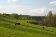 Piękno mazurskiej przyrody (fot. Jan Wilkanowski)