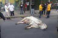Toros sueltos provocan caos en Iztapalapa toros-