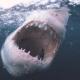 drones en las playas para localizar a los tiburones, localizar a los tiburones, drones, Australia, tiburones en Australia, tiburones en las playas
