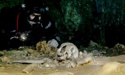 perezosos gigantes en una cueva
