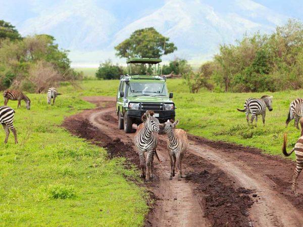 Cazador ilegal es cazado y devorado por leones en Sudáfrica krugerparken-sydafrikas-storsta-nationalpark-600x450