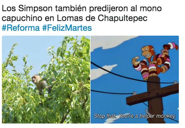 Buscan al mono capuchino de Reforma tras fugarse de una persecución Captura-de-pantalla-2018-03-28-a-las-12.25.24