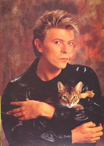 Día Internacional del Gato: celebridades que aman a los mininos abowie-medium