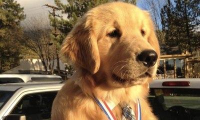 perro es el nuevo alcalde