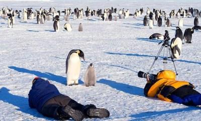 Rescatan a pingüinos durante una filmación
